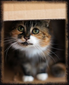 Why Do Cats Love Boxes - Theory #1: Security
